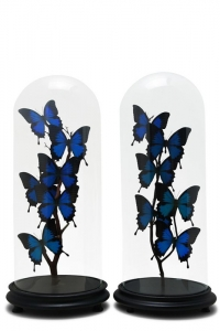Butterfly Domes Antique Pairs