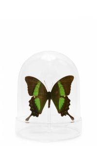Mini Green Butterfly Domes