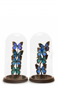 Butterfly Domes Modern Pairs