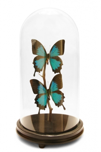 Modern Duo Butterfly Domes