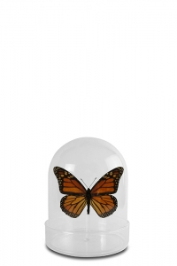 Mini Butterfly Dome