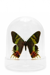 Mini Butterfly Domes