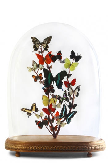Large Antique Butterfly Domes