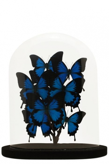 Vintage Papillon Butterfly Domes