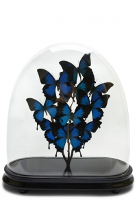 Papillon Butterfly Domes