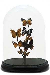Antique Butterfly Domes