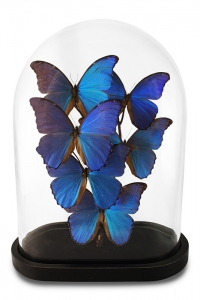 Modern Morpho Butterfly Dome