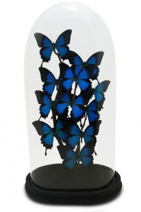 Large Papillon Butterfly Domes