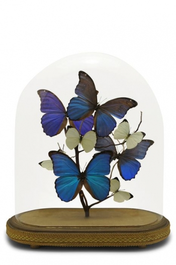 Belle Vintage Butterfly Domes