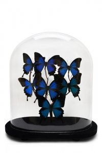 Vintage Ulysees Butterfly Domes