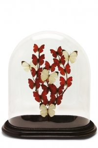 Cherish Butterfly Dome