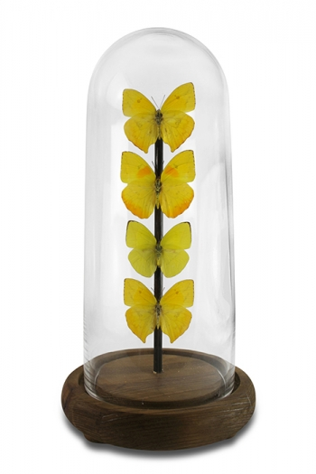 Haut Butterfly Domes