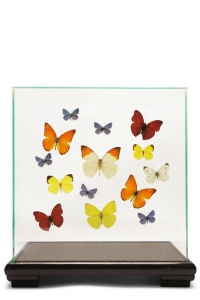 Butterfly Glass Cases