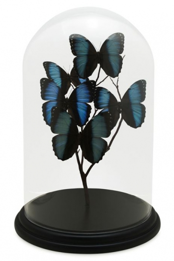 Large Modern Butterfly Domes