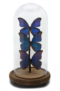 Modern Morpho Butterfly Domes
