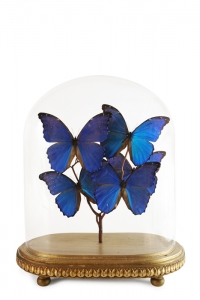 Morphos Vintage  Butterfly Domes