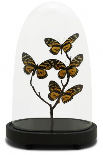 Petit Antique Butterfly Domes