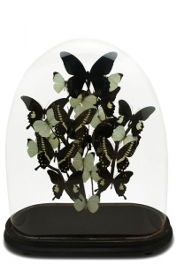 Antique Black Butterfly Domes
